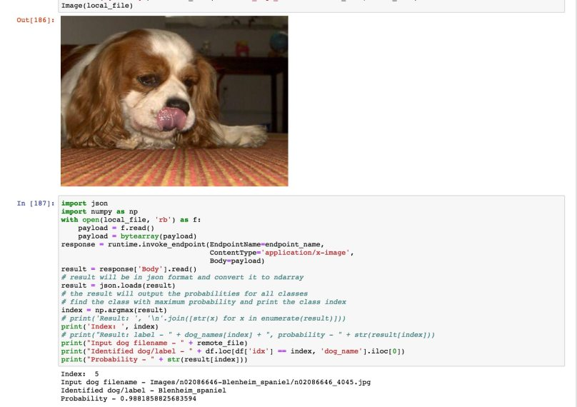 sample_image_spaniel_1